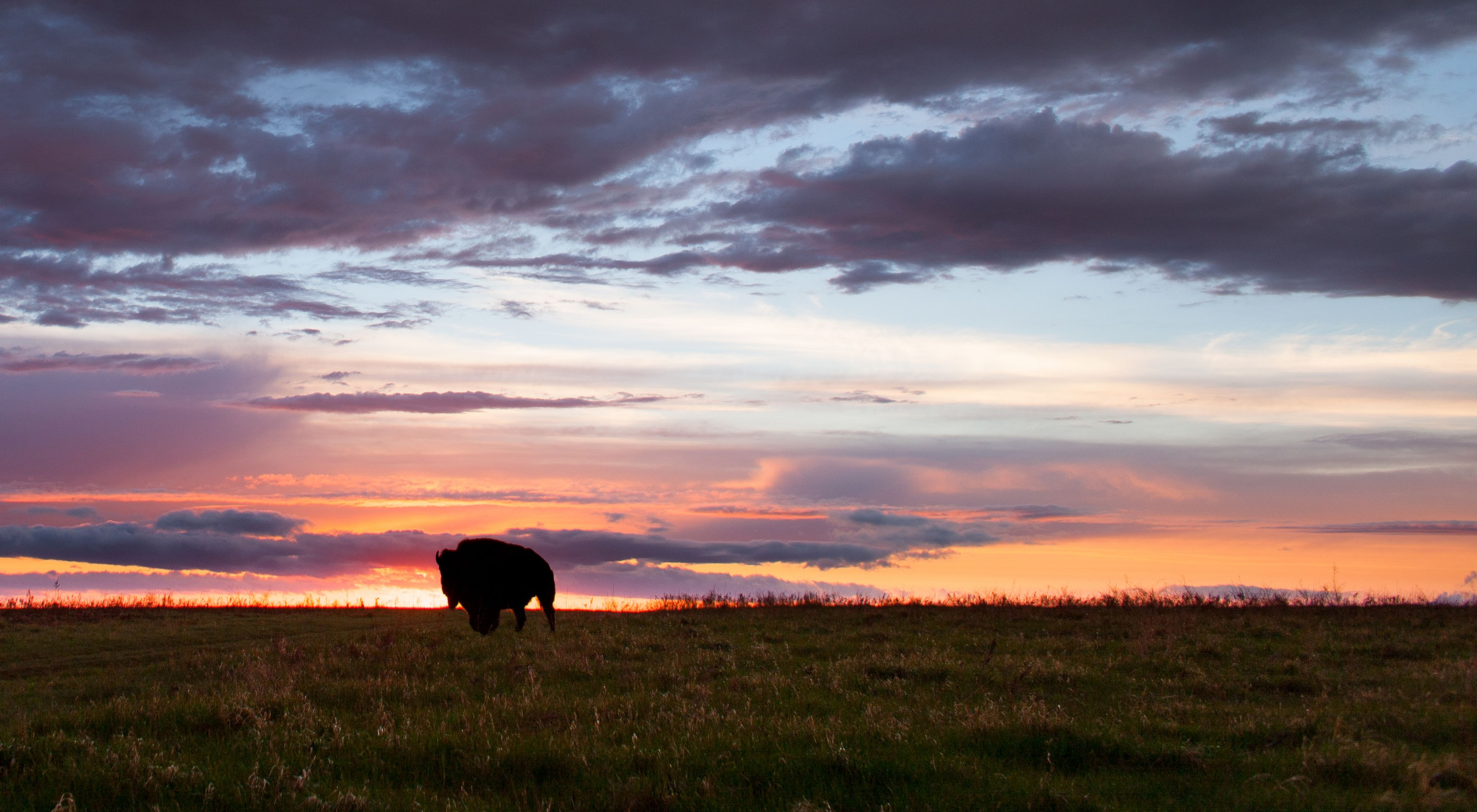 Silhouette of a bison on the prairie at sunset.