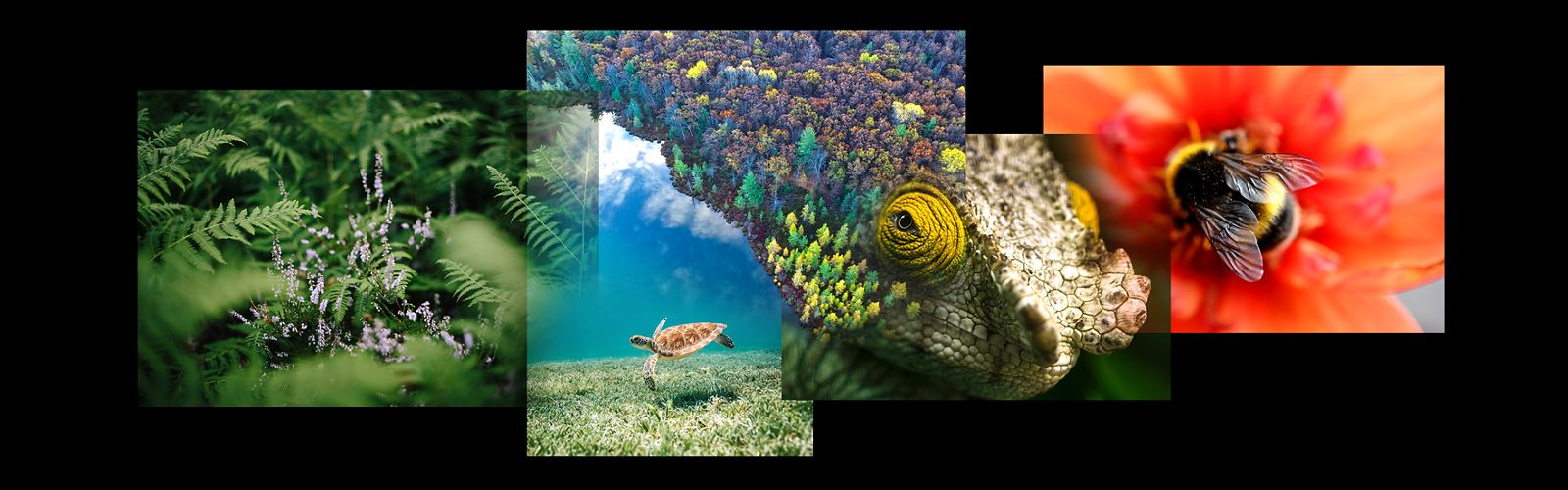 a collage of photos showing forest scenes, a sea turtle, a bumblebee, and a chameleon's eye, against a black background