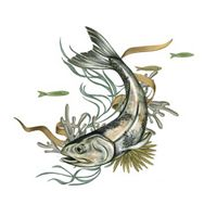 A color illustration of a fish