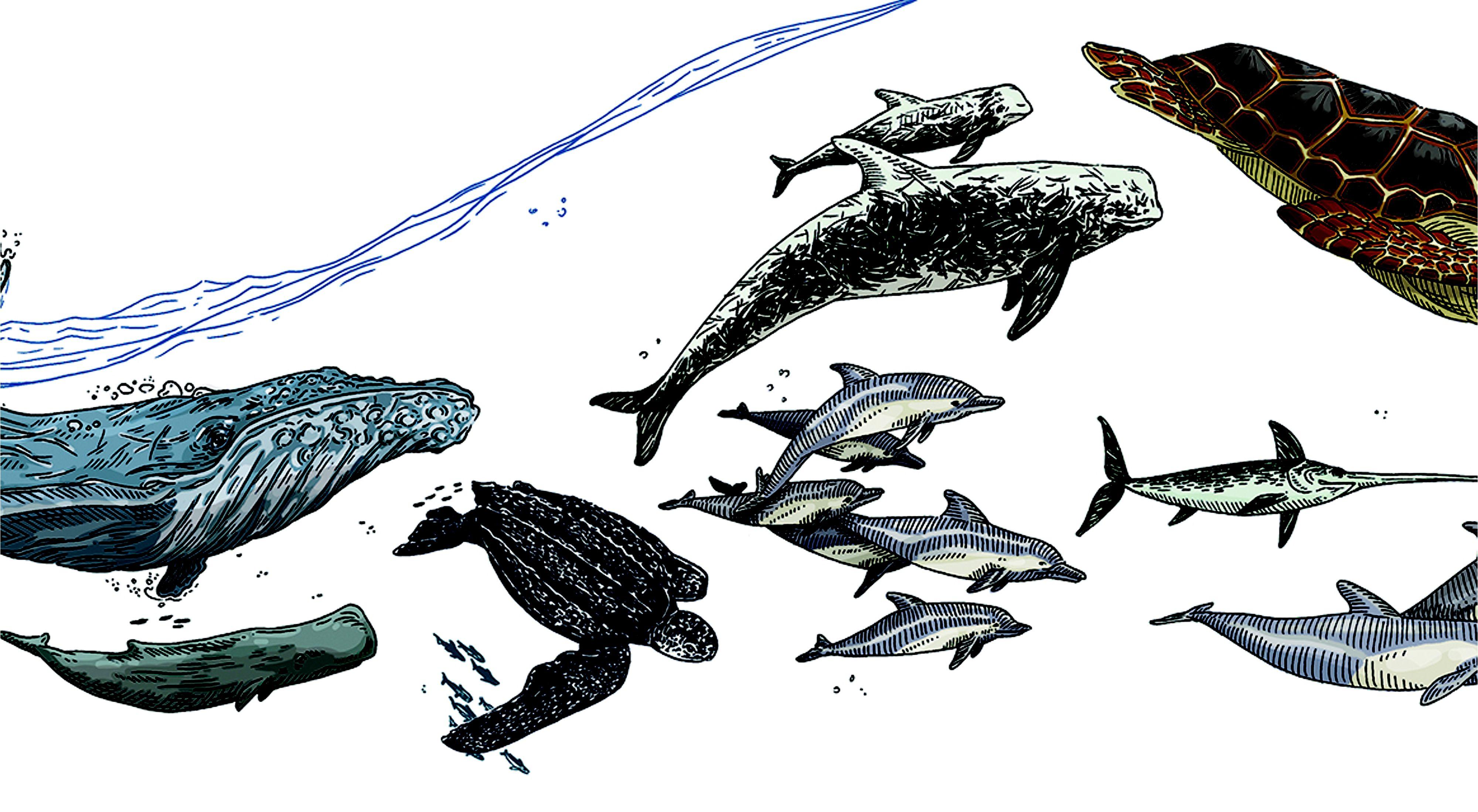 illustration for Summer 2021 magazine article on sustainable swordfish fishing
