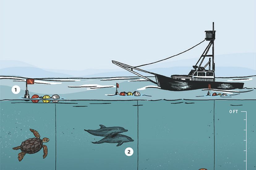 An illustration of a fishing boat with fishing lines going deep underwater to avoid turtles and marine mammals but reach swordfish.
