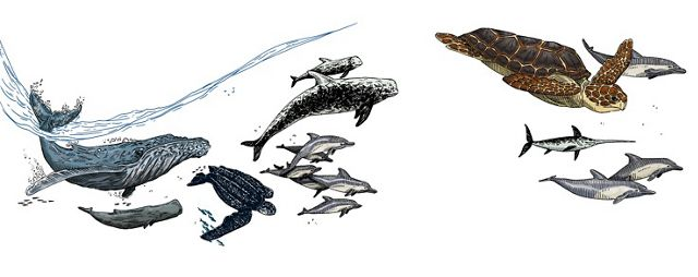 An illustration of marine mammals and sea turtles swimming near the surface of the ocean.