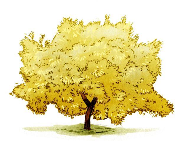 illustration of a large bushy yellow tree