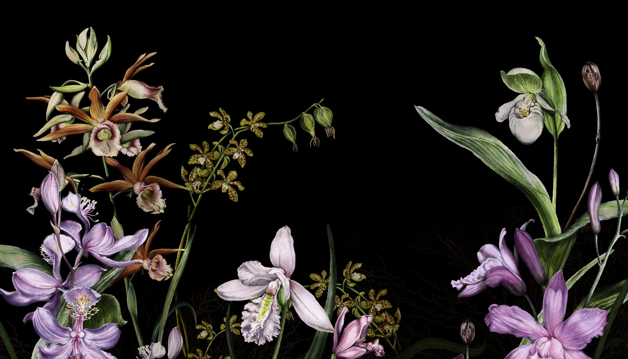 Any illustration of several kinds of orchids against a black background.