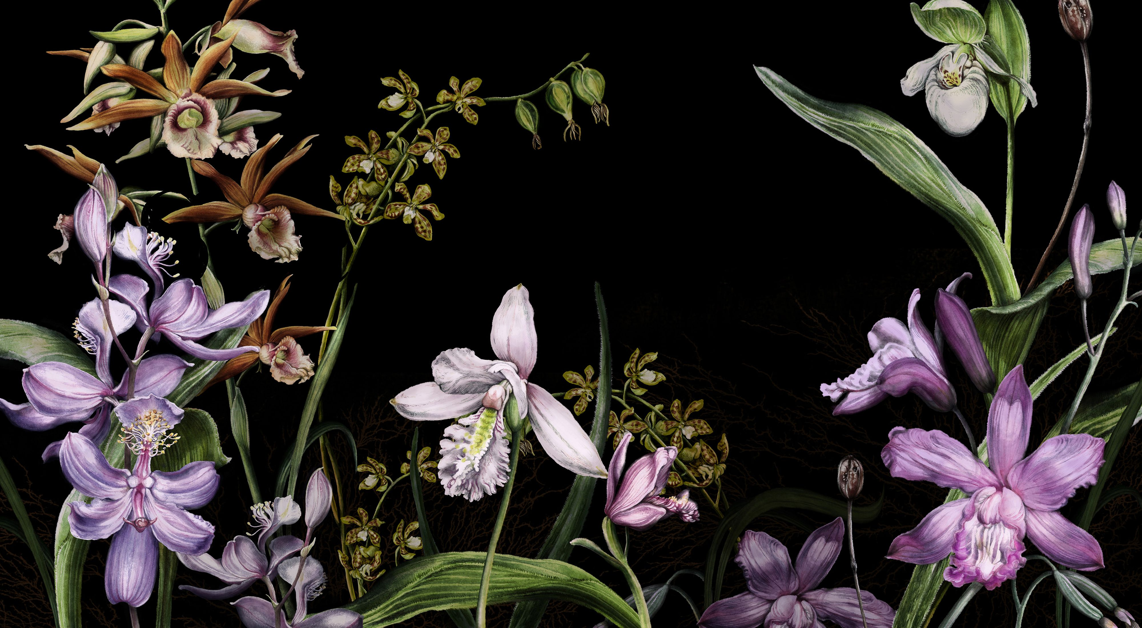A color illustration of multiple species of orchids against a black background