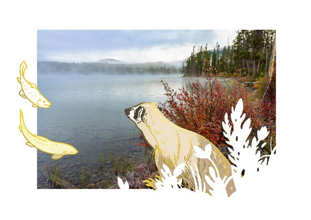 an illustrated badger and fish explore a lake and forest.