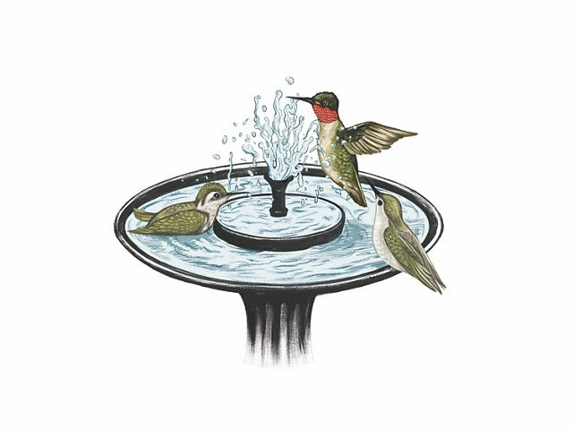 hummingbirds playing and bathing in a birdbath