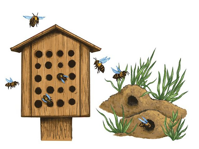 bee houses and native bee habitat do it yourself pollinator garden