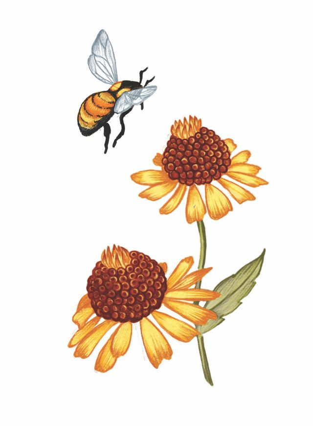 A color illustration of a bee and flowers