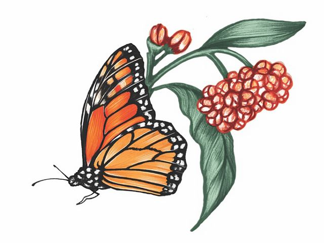 A color illustration of a monarch butterfly and flowers