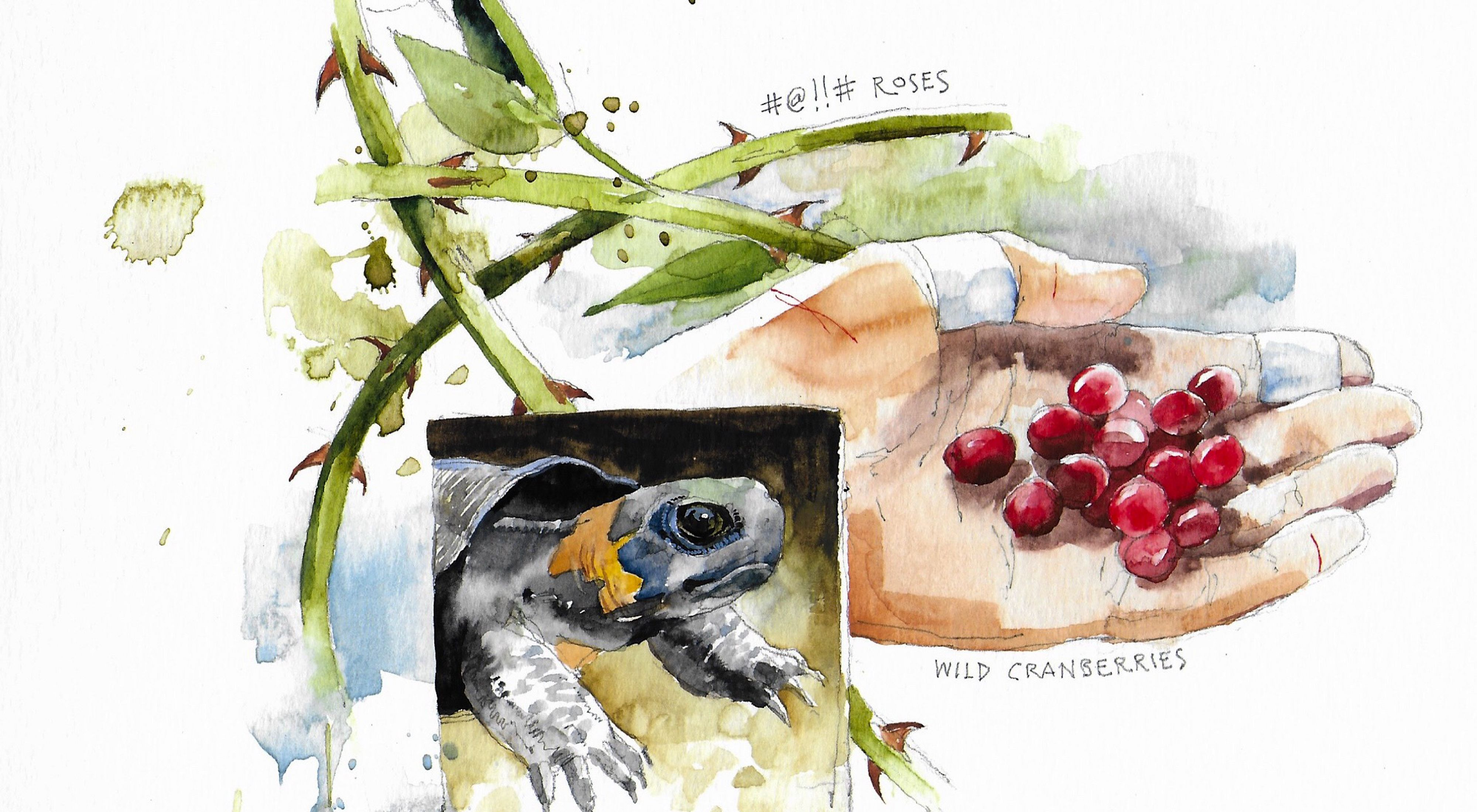 An illustration shows thorns, berries and a turtle from a Tennessee bog