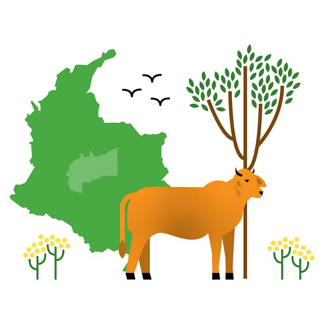 illustration with outline of Colombia, cow, and tree
