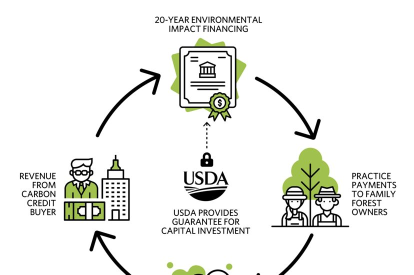 Graphic showing how the Family Forest Carbon Program helps family forest owners engage in the carbon market