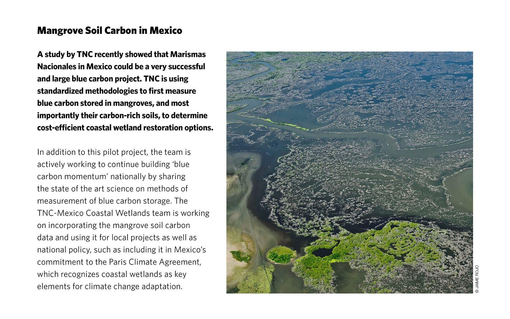 Mangrove Soil Carbon in Mexico
