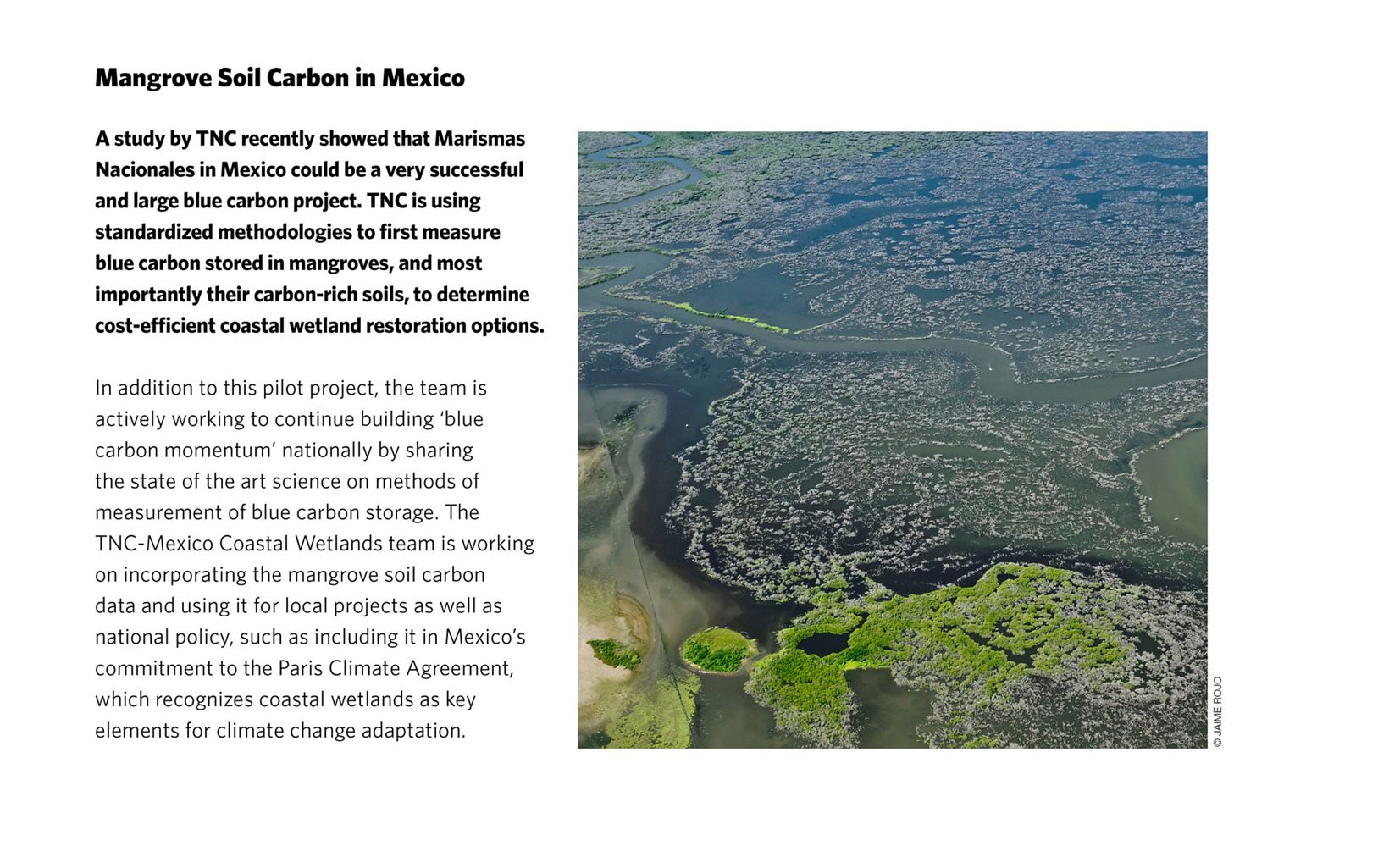 Mangrove Soil Carbon in Mexico