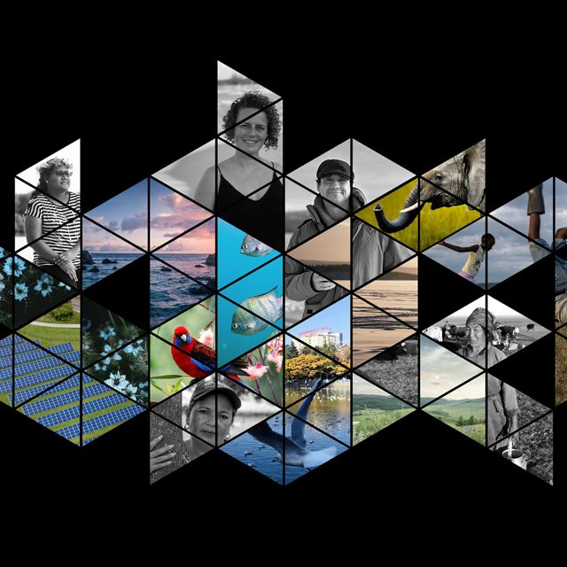 Photos of people, animals, and nature in hexagon tiles