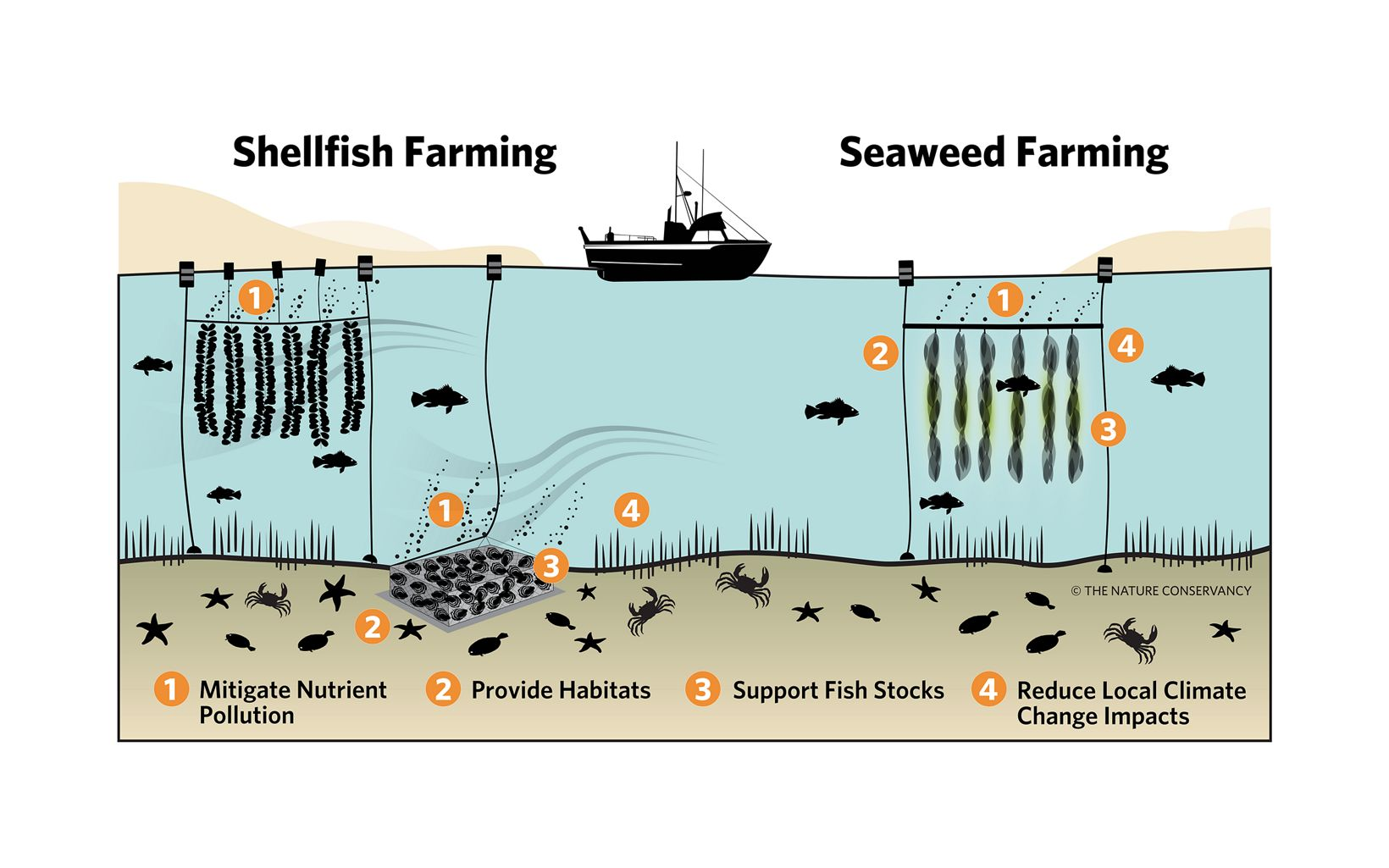 Of the three sectors chosen for deeper analysis, near-shore bivalve production and seaweed aquaculture offers the clearest environmental value proposition.