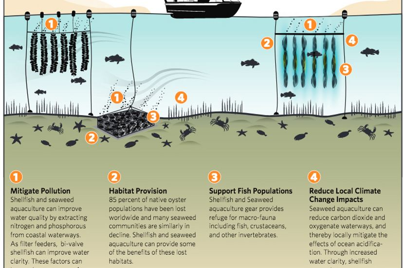 Ecosystems Benefits of Aquaculture Infographic