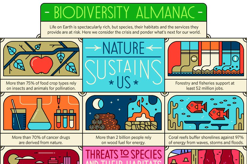 a colorful infographic explains the importance of biodiversity.