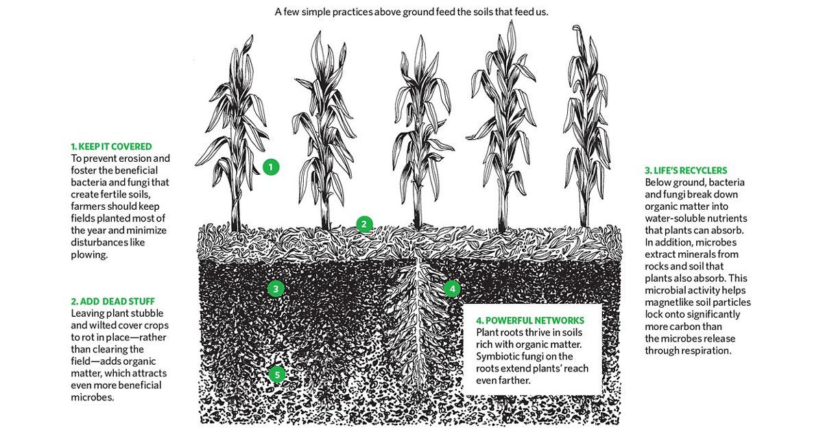 Graphic shows crops at the top level, dead plant matter decomposing to feed the soil, and the soil and roots below