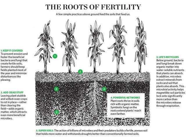 The Roots of Fertility
