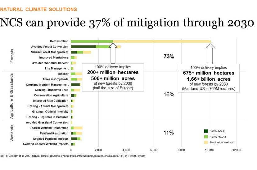 Graph showing need for reforestation as a way to mitigate climate change.