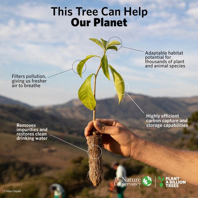 This tree can help our planet