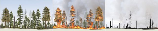 An illustrated sequence showing how forest overcrowding in an un-managed forest can cause a damaging wildfire.