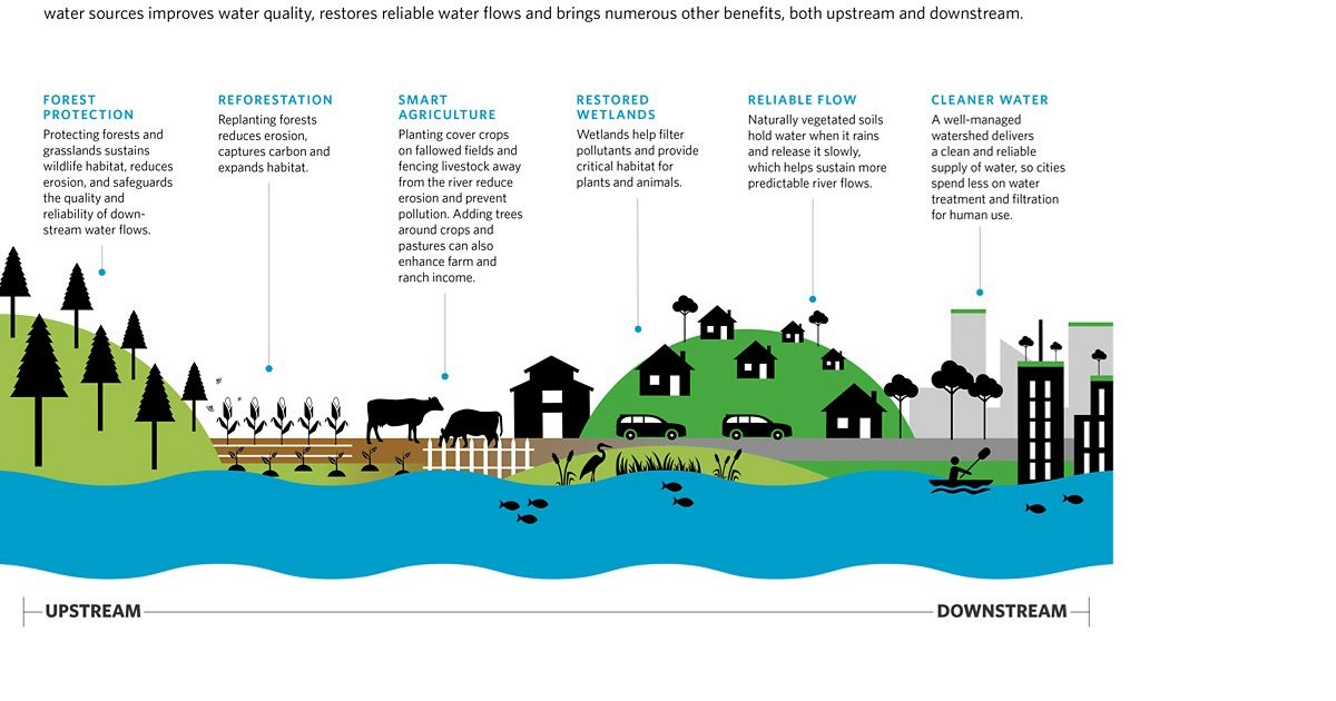 Infographic showing natural solutions to create a healthy watershed.