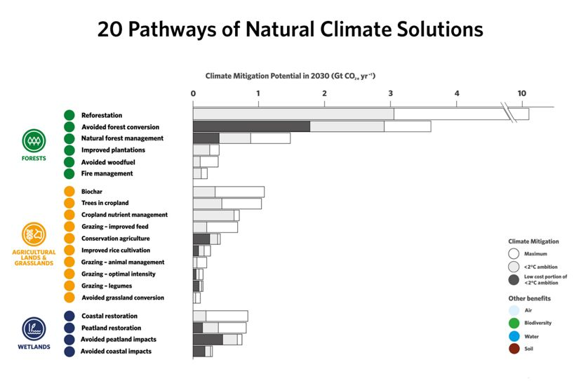 Infographic showing 20 pathways of NCS potential