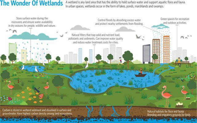 The Wonder of Wetlands