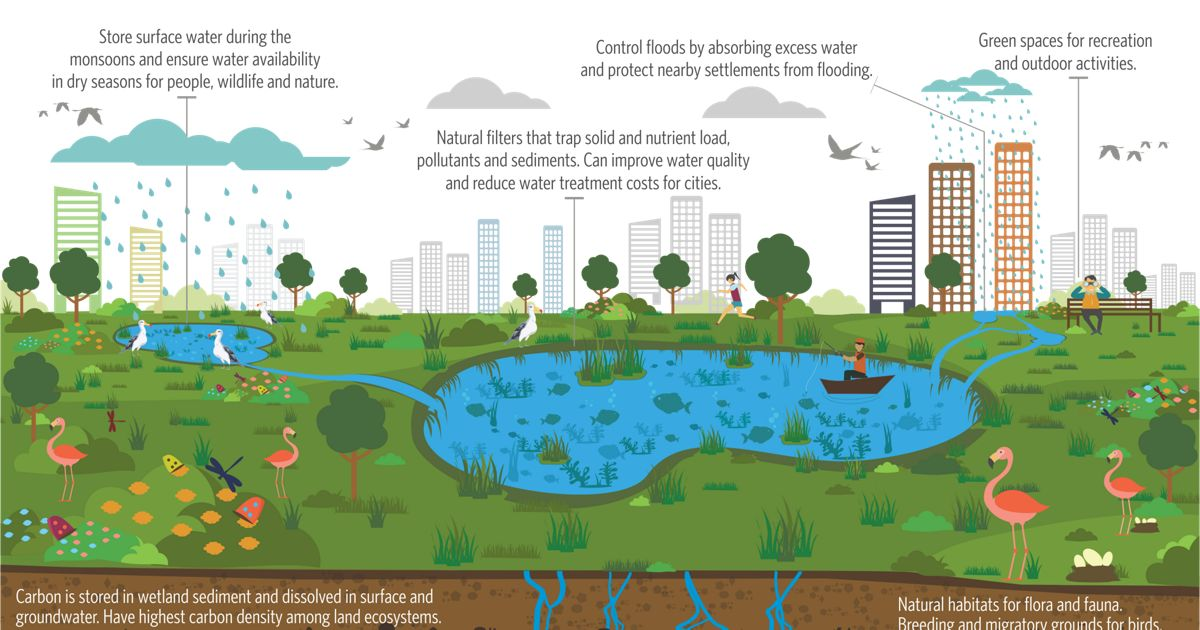 The Wonder of Wetlands