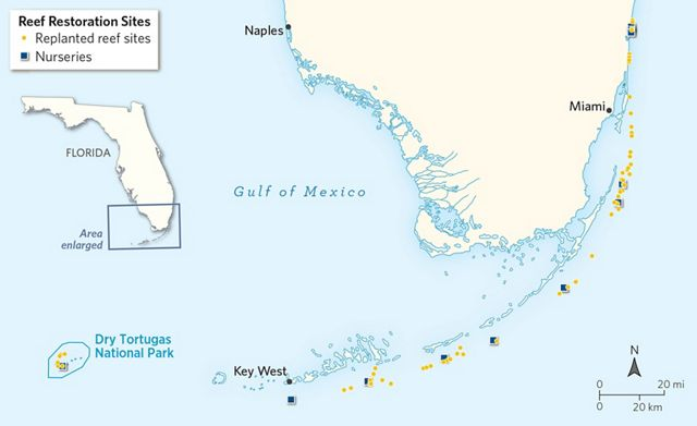 a map shows the tip of South Florida and the Keys, with dots marking coral nurseries