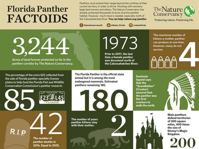 Florida Panther Factoids