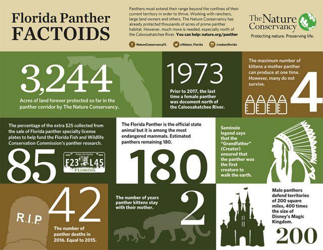 Florida Panther Factoids
