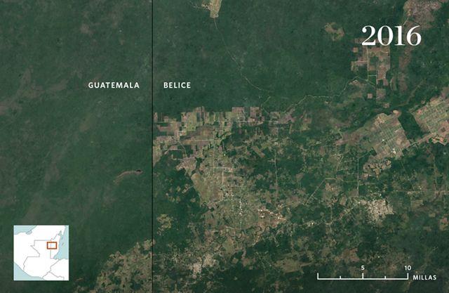 Vista aérea con desarrollo invadiendo el bosque.