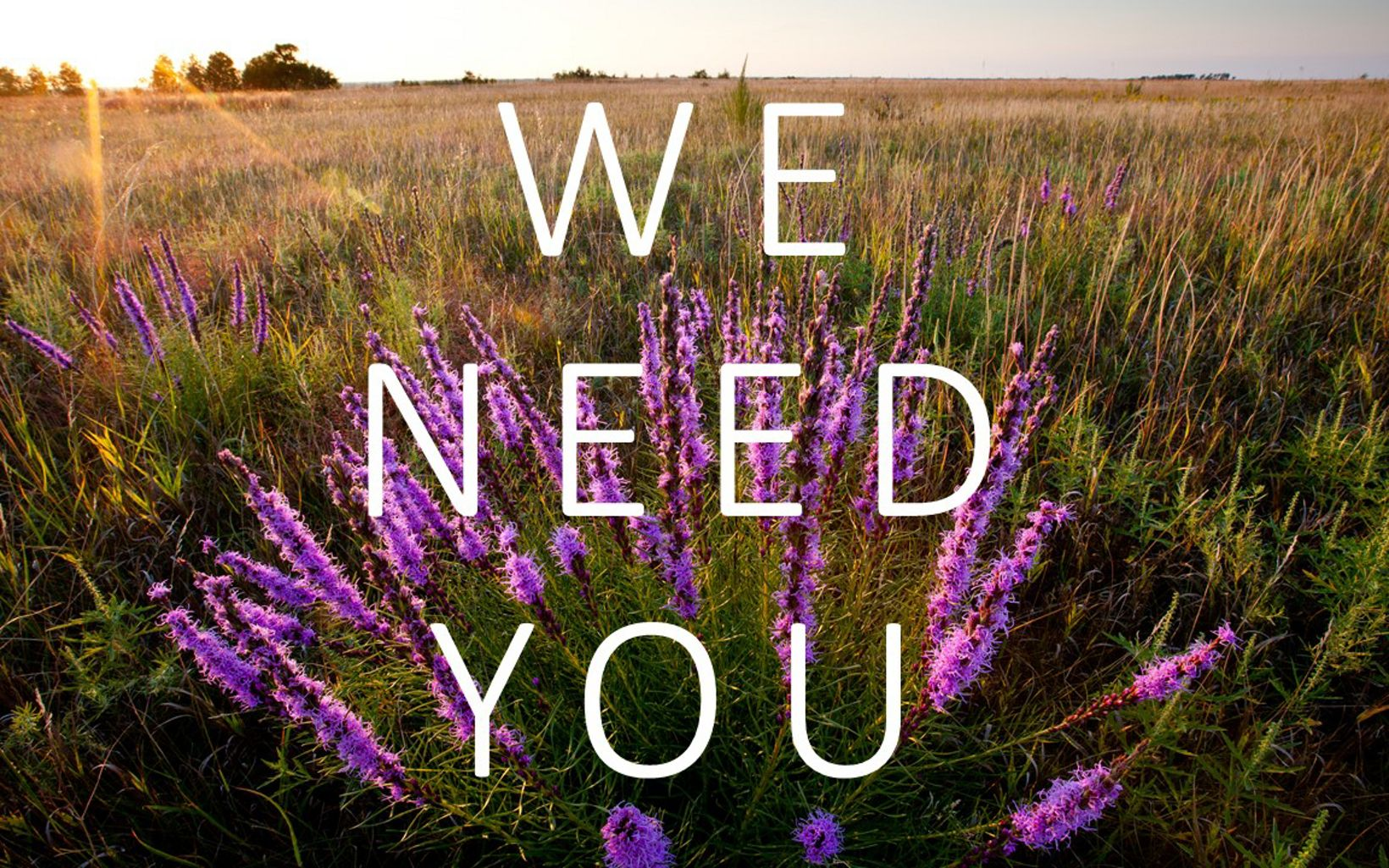 The words we need you in front of a landscape image with purple flowers.
