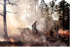 Crew member surveying a controlled burn.