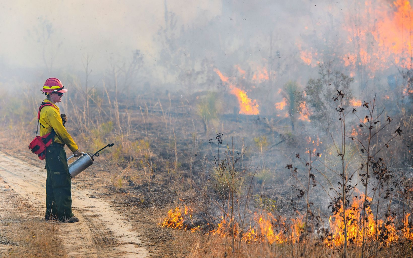 Firefighter with fire torch stands next to a prescribed fire.