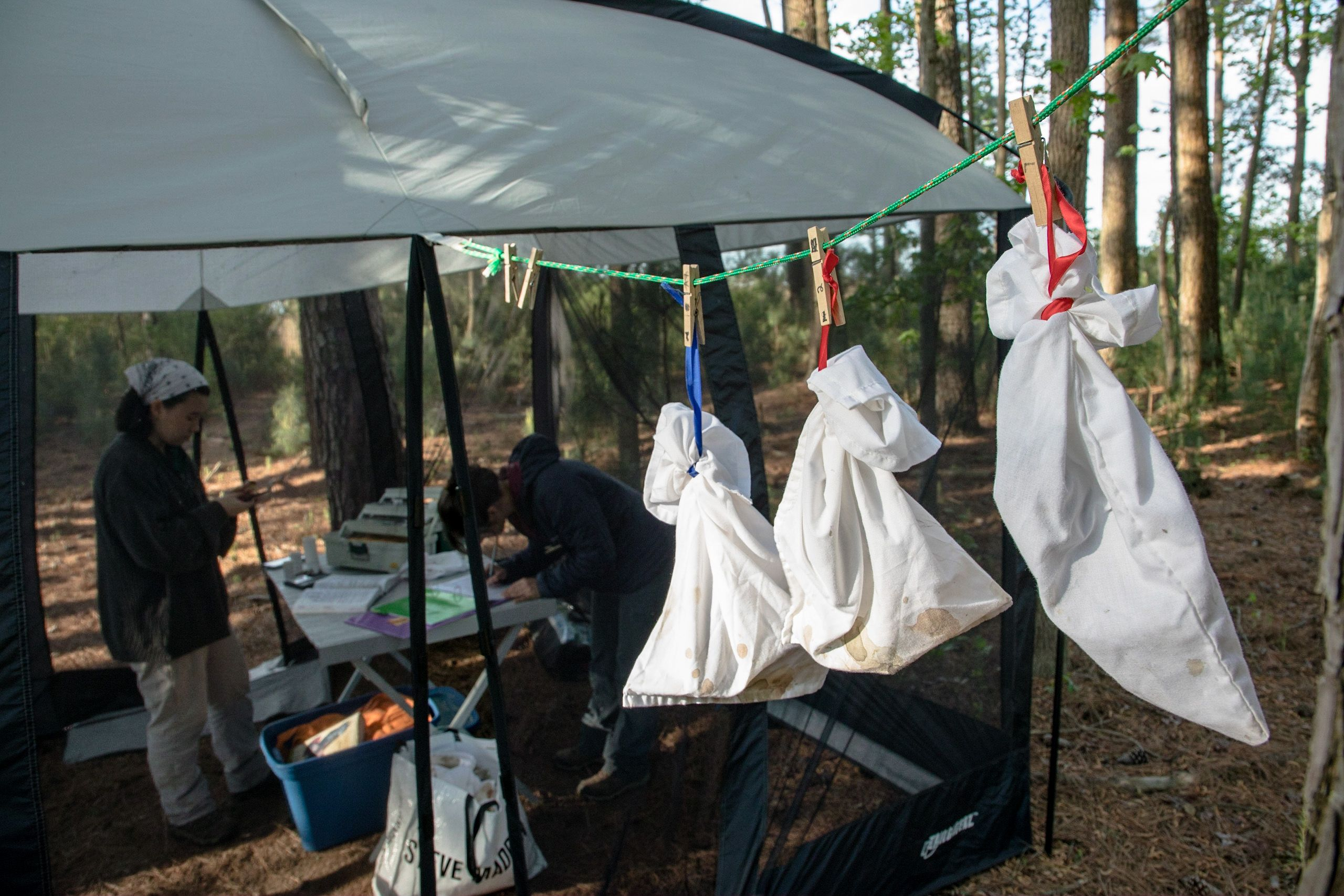Three white cloth sacks hang pinned from a line. In the background under an open sided tent two women record observations for a bird banding study.