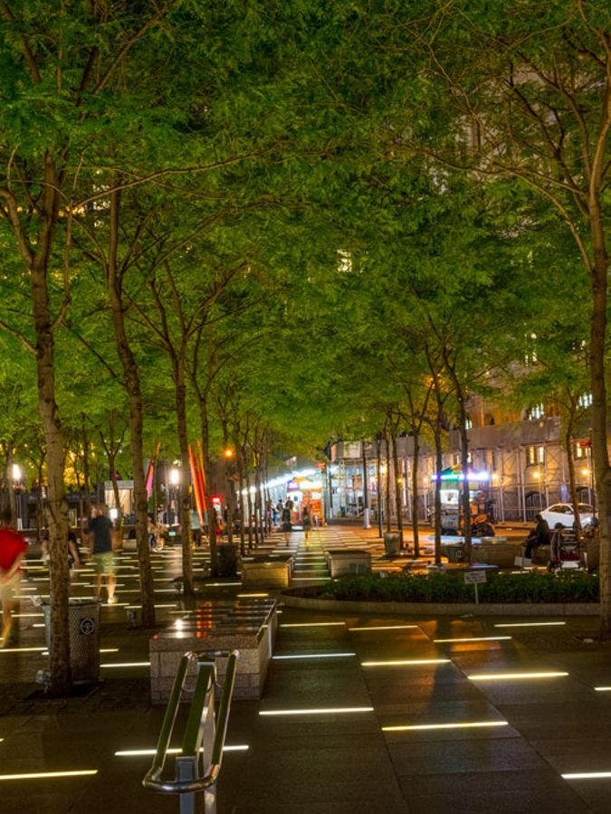 View of tree-lined city park at night.