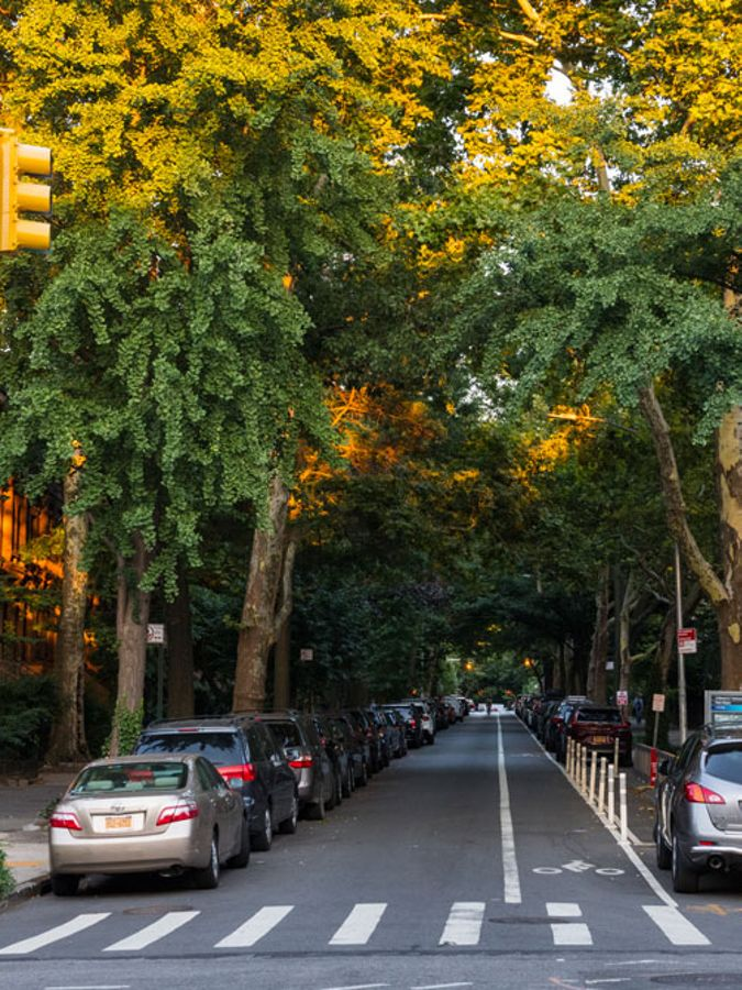 Towering, leafy trees line a city street.