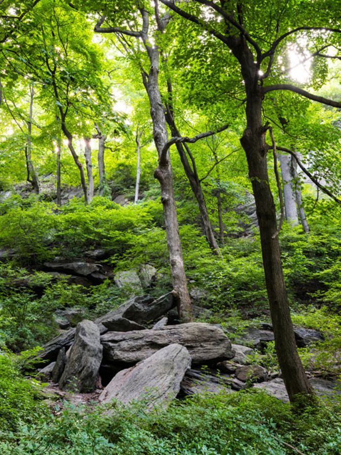 Rocky, forested ravine in city park.