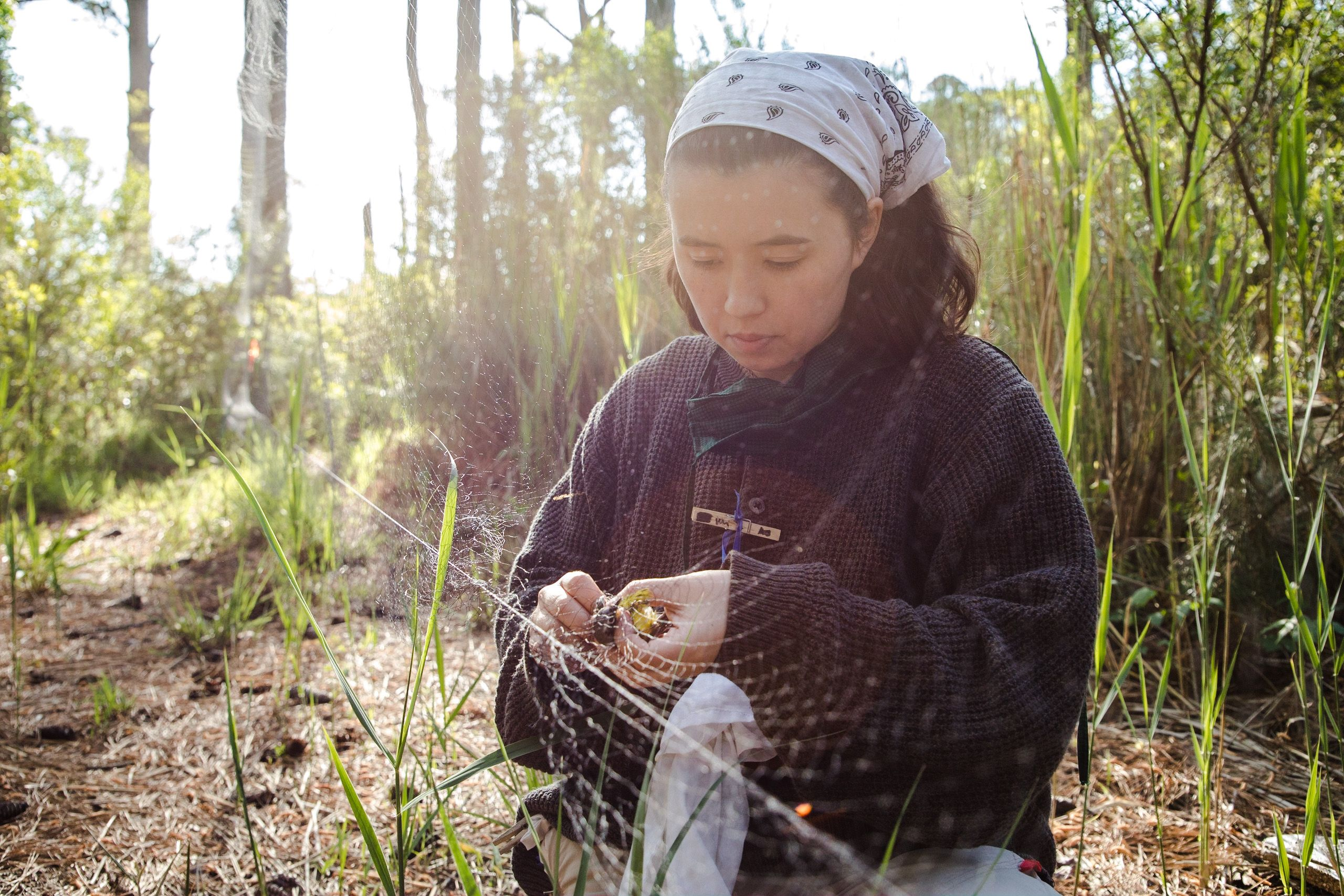 A woman kneels on the ground gently freeing a small bird from a long thin net that has been strung between trees to catch birds for a banding project.