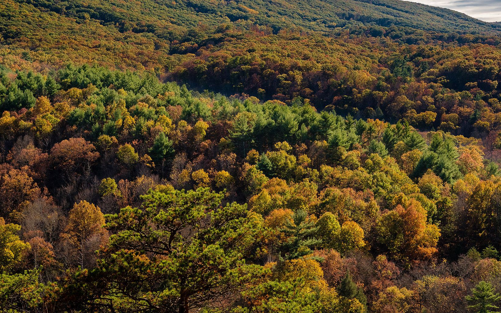 We're working to keep the forests of the central Appalachians healthy and connected n the face of climate change.