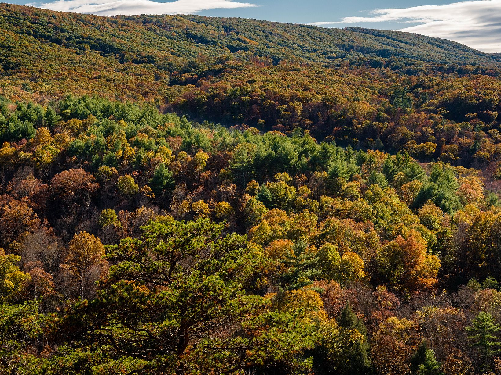 Thick forests cover the sides of a rolling mountain ridge. The trees are beginning to show falls colors of orange and gold.