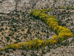Cottonwoods and sagebrush in Boulder, Utah