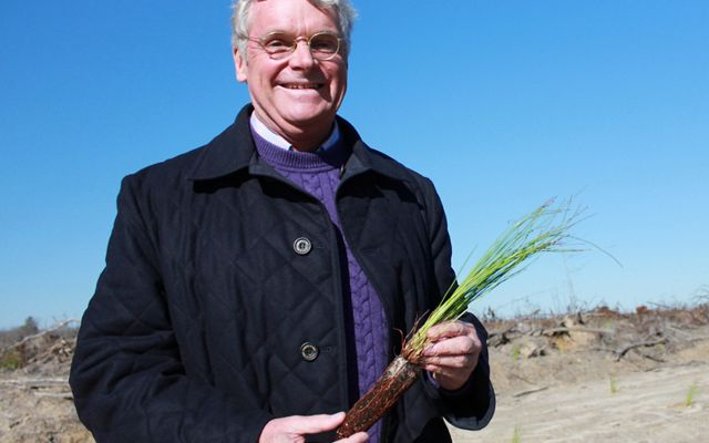 A smiling man, landowner and TNC donor Bill Owen, holds a longleaf pine seedling during a planting day on his property.