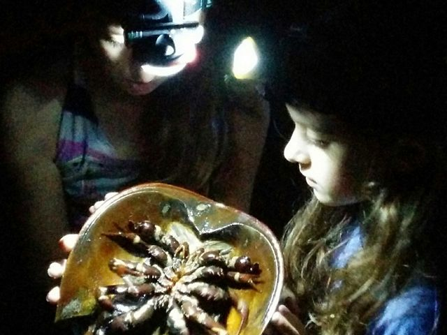 two girls with headlamps looking at a horseshoe crab in the dark