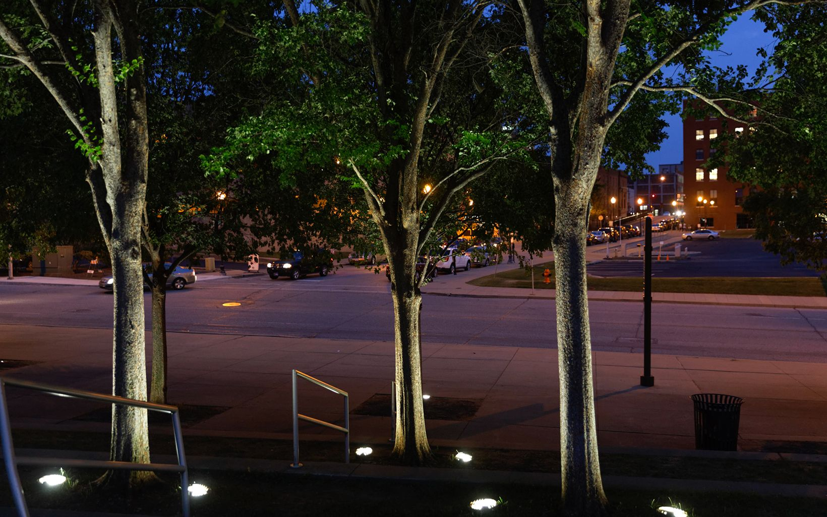 Trees near Waterfront Park in downtown Louisville. Urban street trees can filter about a third of the fine particle pollution in their immediate vicinity.